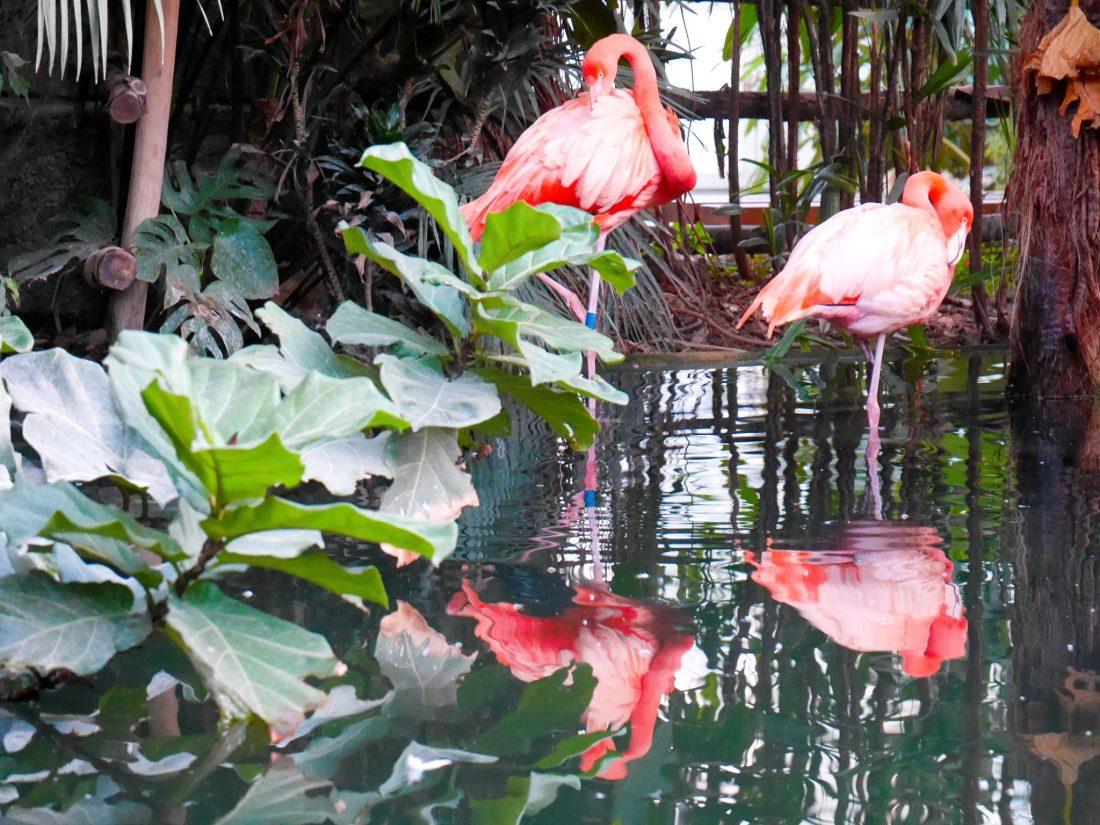 flamants-roses-parc-phoenix-nice