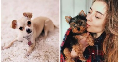 A Lady Required Her Hands and Legs Cut off In the wake of Contracting Disease from Dog 'Kisses'