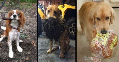10-Dogs-Who-Surprised-Their-Humans-With-Funny-Gifts