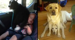 16-Dogs-With-Zero-Sense-of-Personal-Space