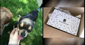 Amazon driver fired after kicking customer's tiny cute chihuahua