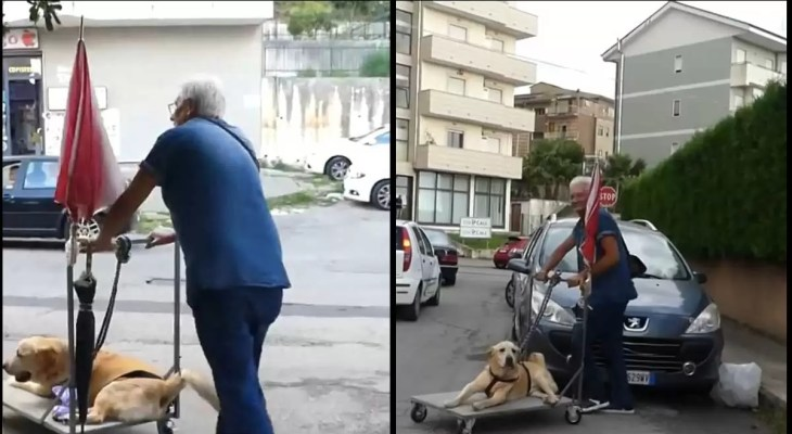 Man-captured-on-camera-taking-a-sick-dog-for-a-walk-every-day-is-praised-by-thousands