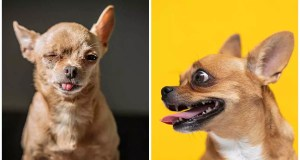 Coughing and Hacking in Dogs