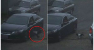 Dog Doesn't Know He's Dumped Thinks Owner Forgot Him By Mistake and Runs After Car