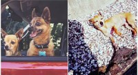 Here's Exactly What Happens To The Body Of A Dog Left In A Hot Car
