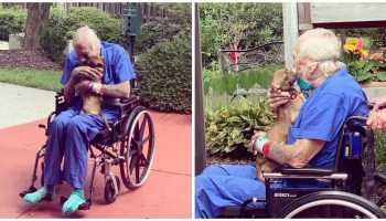 Veteran Spared By Chihuahua In the wake of Having A Stroke On A Boat
