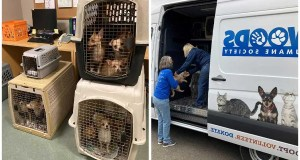 104 Dogs Rescued from Lompoc Home by Animal Services