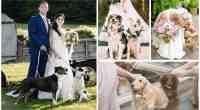 ADORABLE-DOG-RING-BEARER-AND-DOG-FLOWER-GIRL-IDEAS