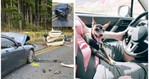 Chihuahua caused a crash that closed Highway 3 and injured 2