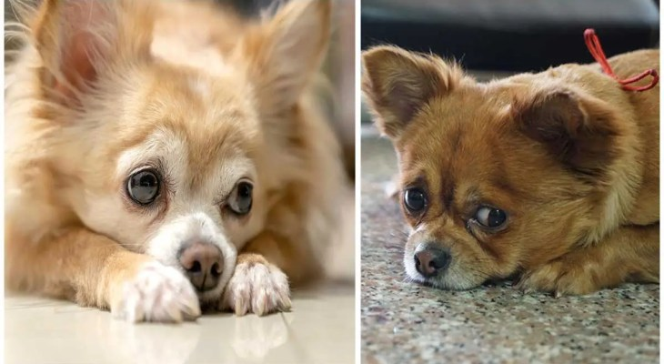 How to Apologize to Your Dog: Telling Him You're Sorry in 5 Steps