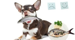 How to Cook Fish for Dogs – 5 Simple Fish Recipes for Dogs