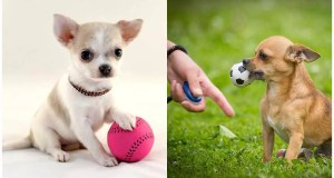 How to Train Your Dog to Play