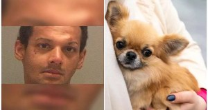 Man captured after purportedly tossing chihuahua from the 5-story gallery