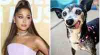 Ariana Grande, Beloved Dog Mom, Launches Non-Profit Animal Rescue