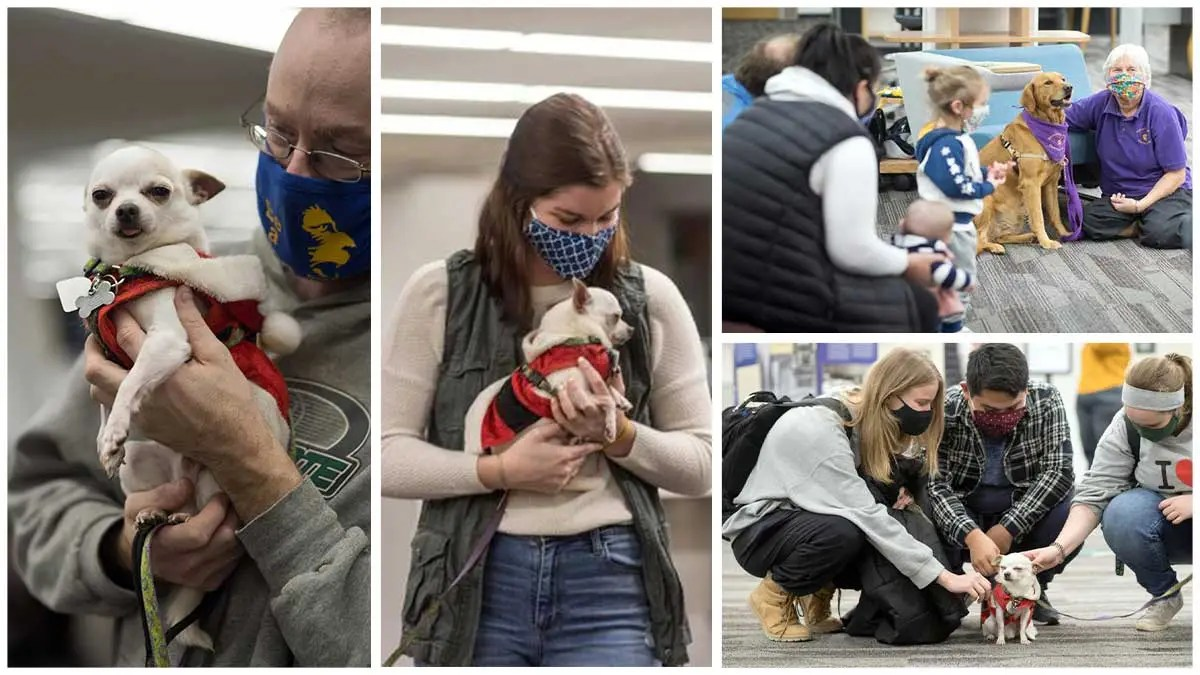 Bringing cheer and tail wags: Therapy dogs visit BSU students