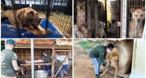 For nearly 200 dogs, a journey from a South Korean meat farm to a shelter in Maryland