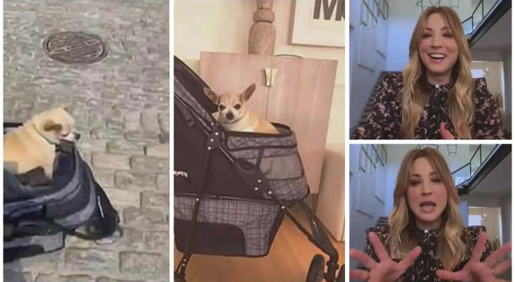 Kaley Cuoco jokes about being jealous of elderly chihuahua Sir Dump Truck stealing press attention
