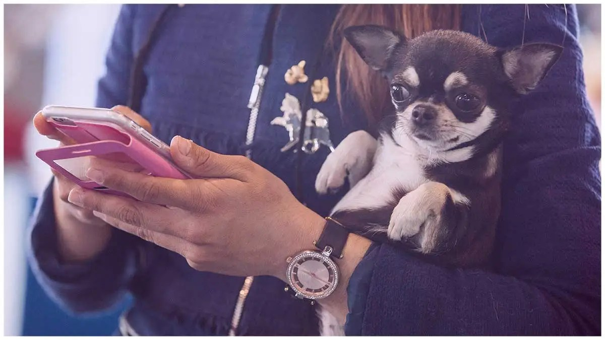 Survey Finds 40 Percent of Americans Would Give Up Their Dog for a Month Over Their Phone