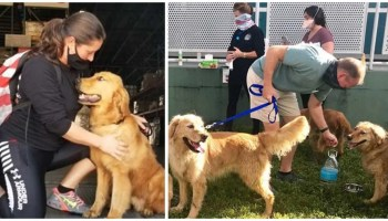 20 dogs saved from China meat market get new homes in Florida
