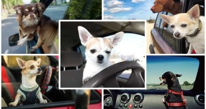 Best cars for dog owners 2021