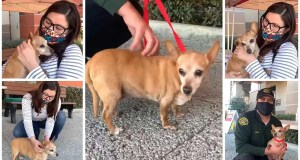 Chihuahua 'Sweet Pea' Is Reunited With Her Owner After Being Lost For 5 Years