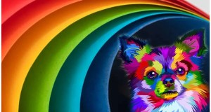 Color therapy for animals