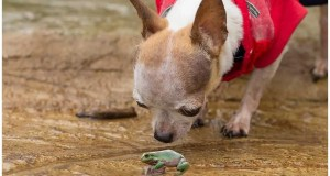 My Dog Ate A Frog – What To Do Next