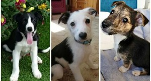 Twenty-four sick and starving puppies found crammed into the back of a van on the M6 are nursed back to health and given new homes with police staff