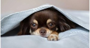 Dog Hiccups – Why Do They Happen and How To Get Rid Of Them