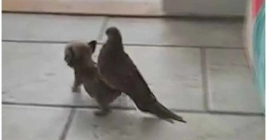 Dove gets piggyback ride from the dog at Mia Foundation