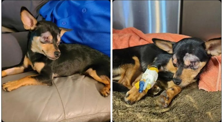 Police searching for whoever severely injured dog found in Woonsocket