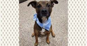 Summit County's adoptable pets for the week of Jan. 17, 2021
