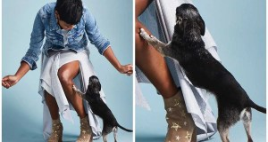 Tamron Hall says goodbye to her chihuahua