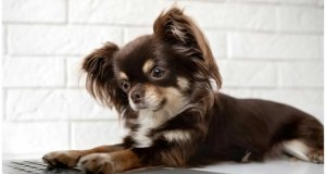Humans' Selective Tweaking Of Dogs Also Altered Their Brains, Says Study