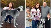 Meet Millie the oldest Great Dane in the UK
