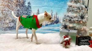 CCH Club Christmas Party @ VCA Kaneohe Animal Hospital