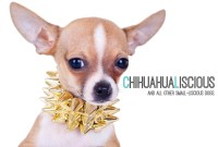 Chihuahua Clothes | Chihuahua Collars | Small Dog Harness ...