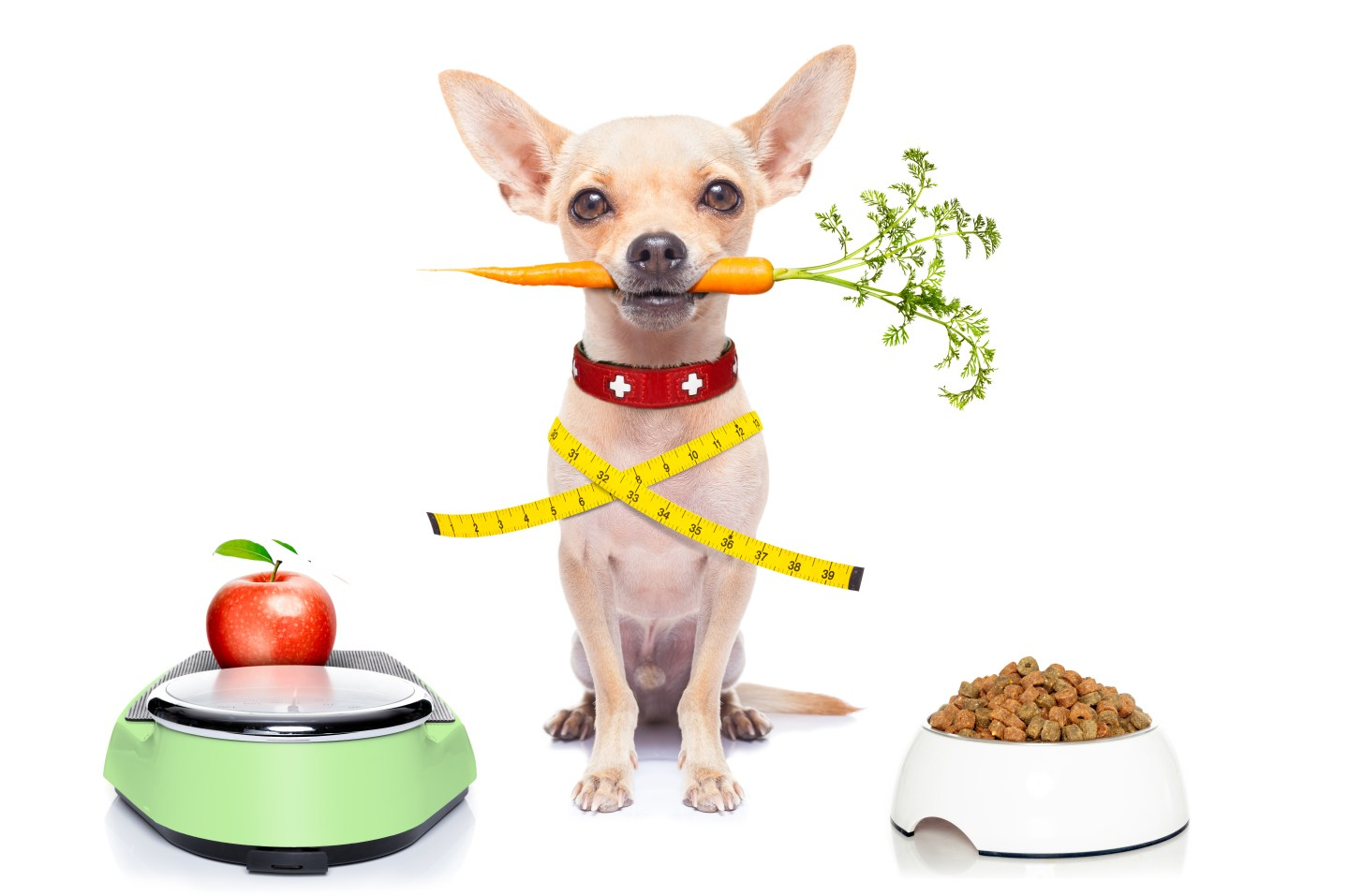 5 Foods that can help prevent canine cancer