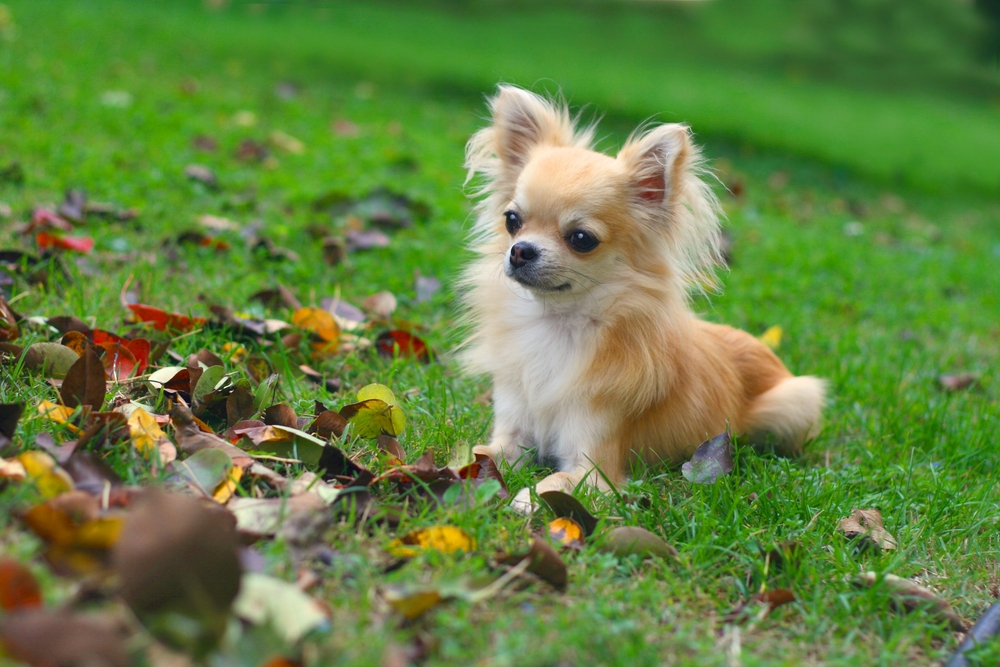 Leptospirosis in dogs: what is it and should we be vaccinating against it?