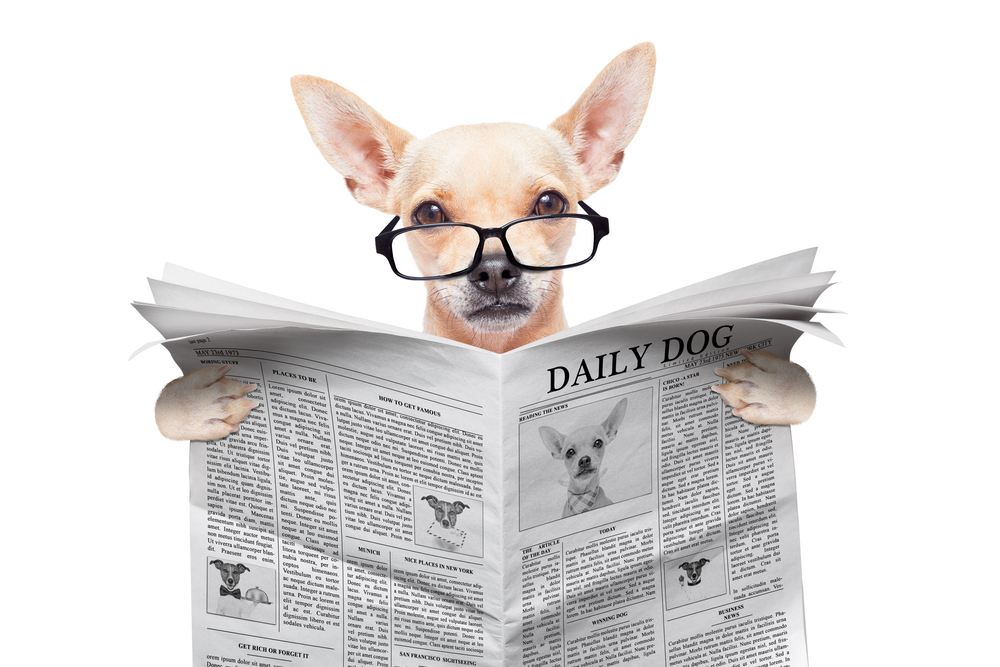 Just how smart is your chihuahua?