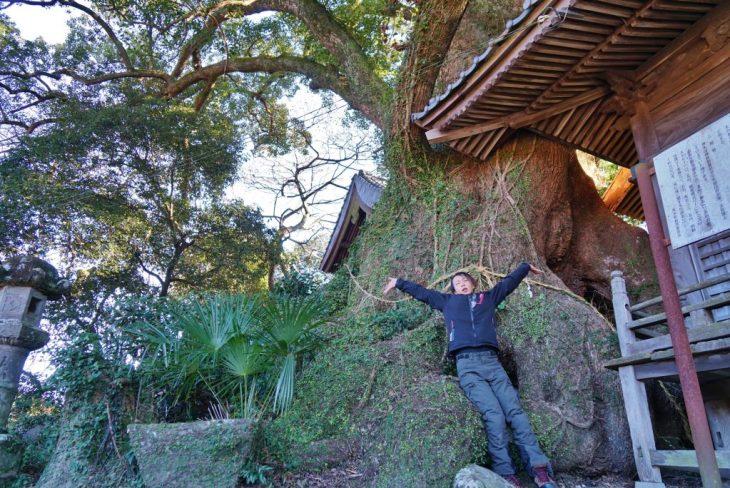 福岡県八女市黒木町湯辺田95 釜屋神社の楠 樹齢約600年 大楠 ちくごさるき