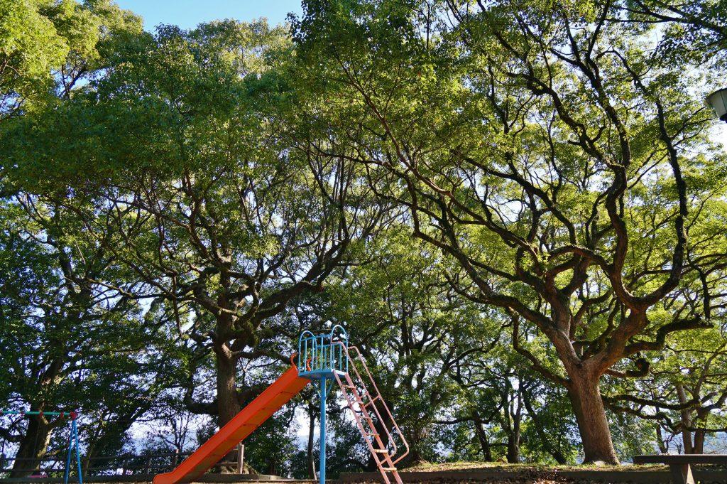 福岡県大牟田市鳥塚町 鳥塚公園 楠の大木 楠林