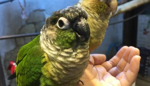 浅草の鳥のいるカフェに行ってきた【東京の観光地】