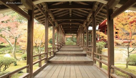 【嵐山】旧嵯峨御所 大本山 大覚寺へ行ってきた【京都の寺院】