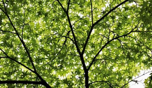 【桜川】青紅葉の季節の薬王寺へ行ってきた【茨城の寺院】