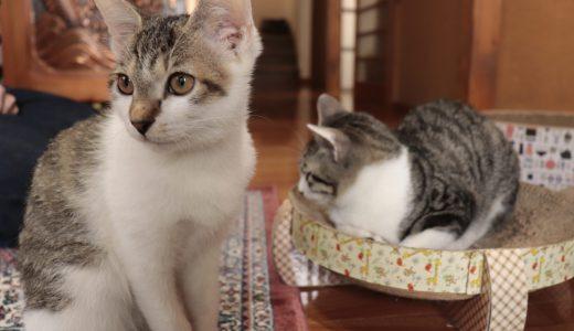 【那須】猫ちゃんに癒される!長楽寺へ行ってきた【栃木の寺院】