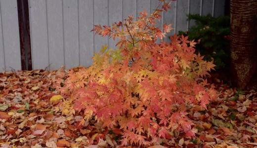 【富良野】紅葉シーズンの富良野神社へ行ってきた【北海道の神社】