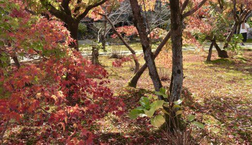 【醍醐/紅葉シーズン】勧修寺へ行ってきた【京都の寺院】