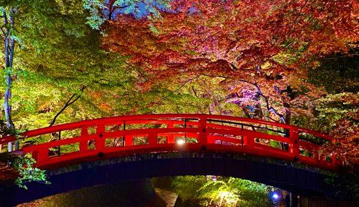 【紅葉シーズン】北野天満宮の夜間特別拝観へ行ってきた【京都の神社】
