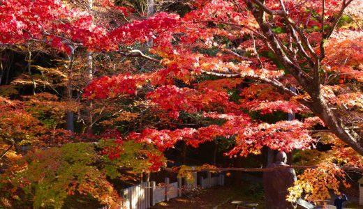 【ちくの西国三十三観音巡り#9】今熊野観音寺へ行ってきた【京都の寺院】